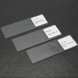 50PCS/Set Biological Glass Sample Prepared Basic Animal Plants Insects Tissues Science Specimen Cover Slips Portable Educational Microscope Slides